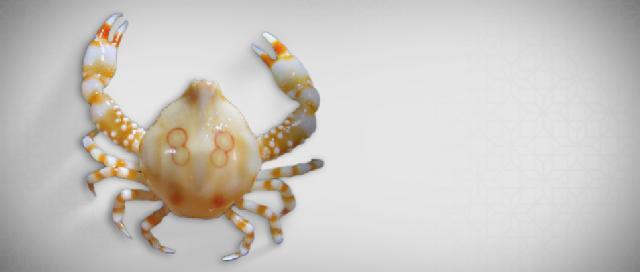 ESC_research_team_finds_new_species_of_crab.jpg